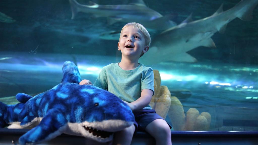 Boy peering into shark tank at Ripley's Aquarium - Myrtle Beach
