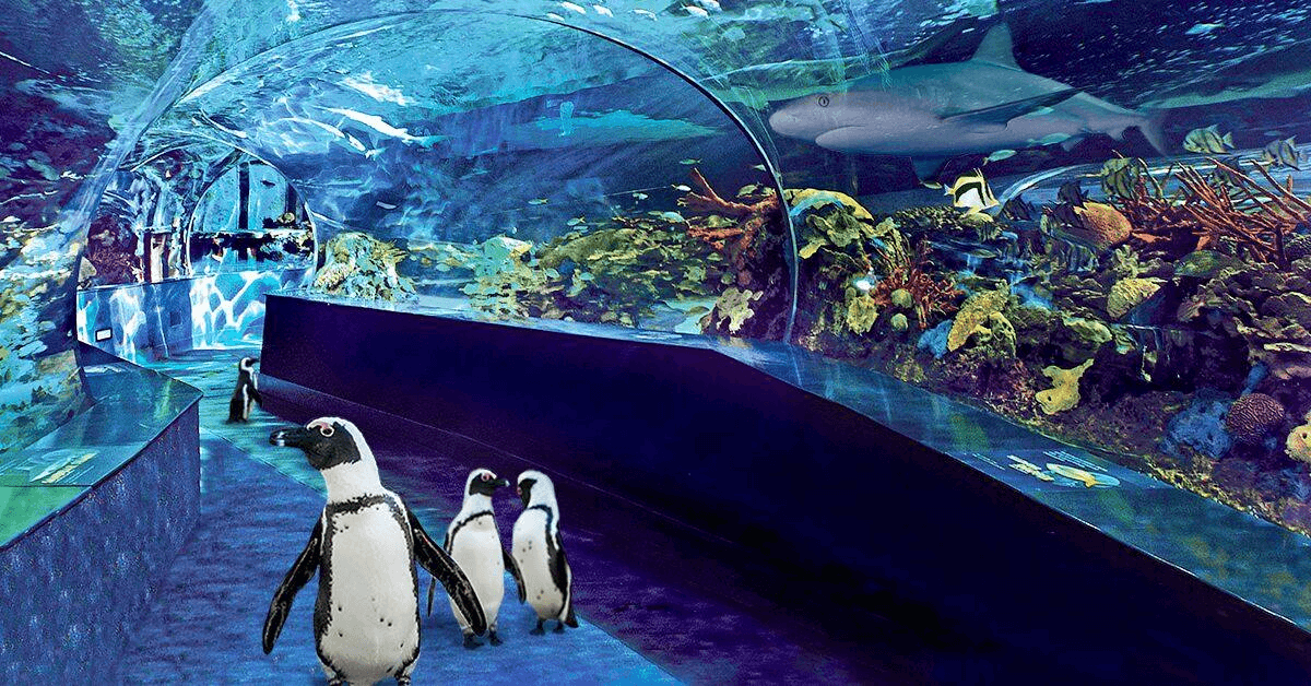 Penguins walking at Ripley's Aquarium - Myrtle Beach