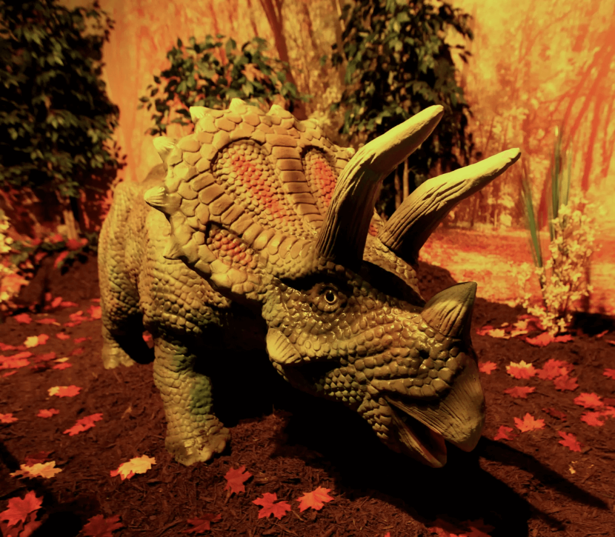 Triceratops model at Dino Park - Myrtle Beach