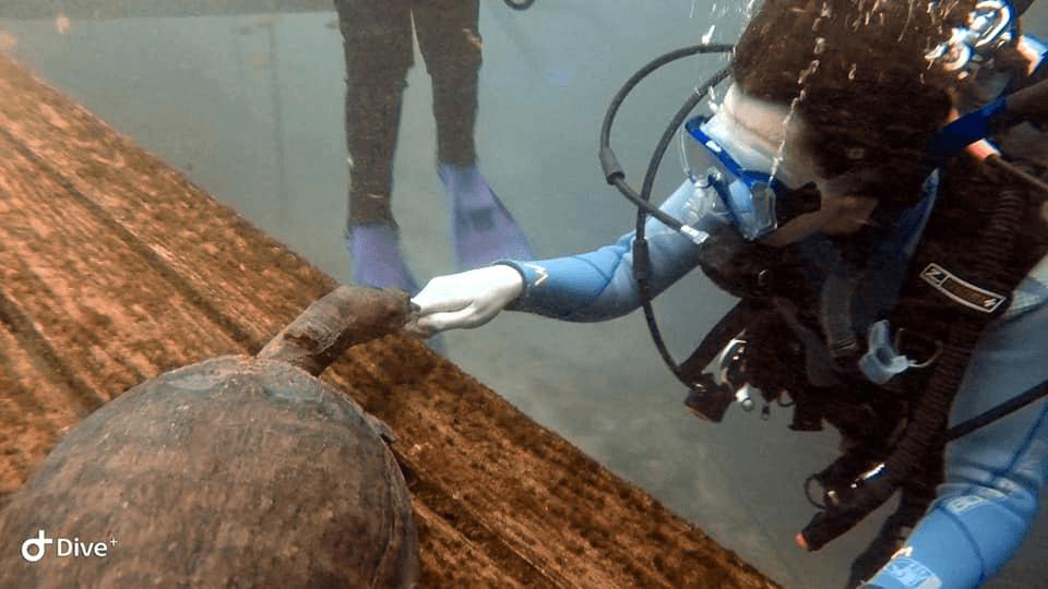scuba diver petting turtle