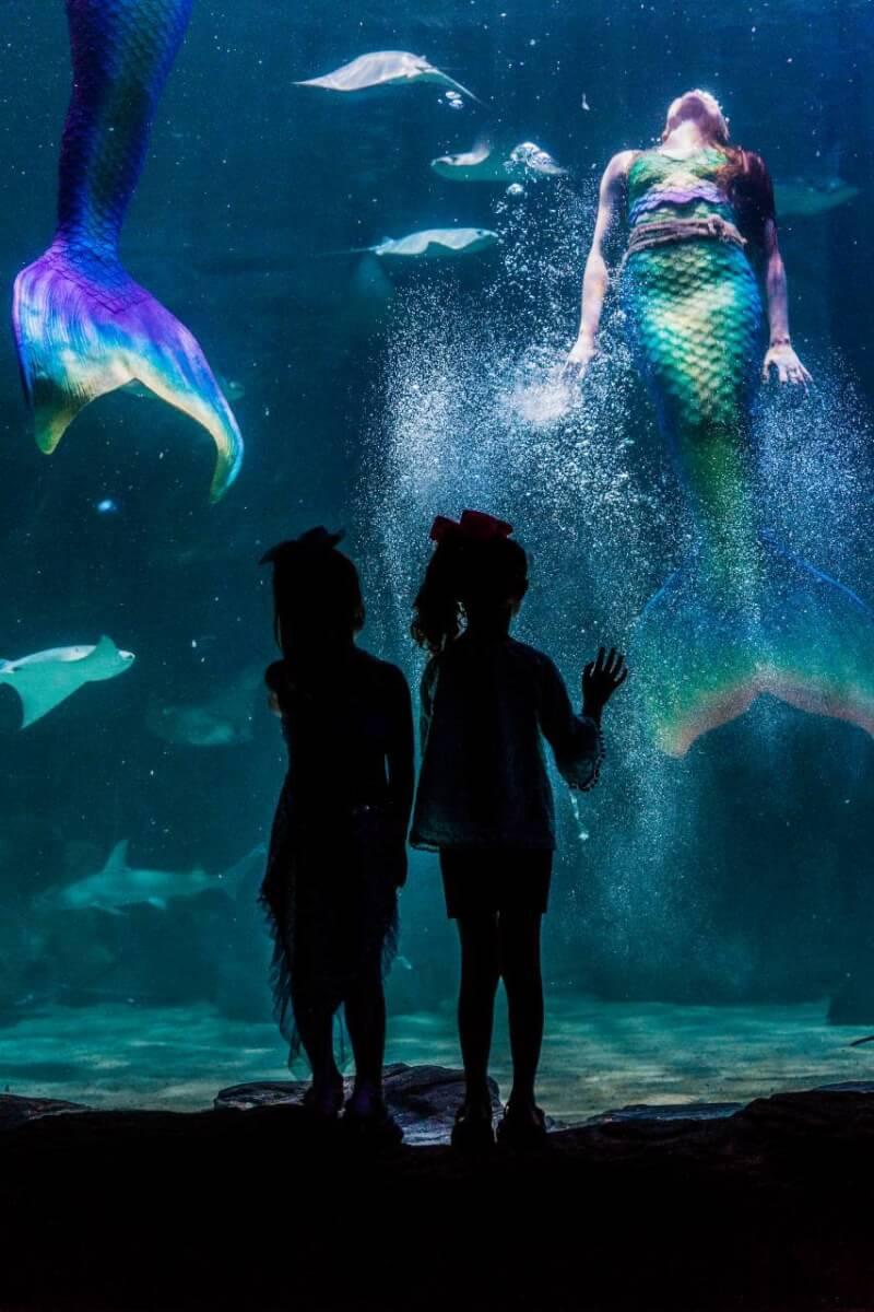 mermaid at Ripley's Aquarium - Myrtle Beach