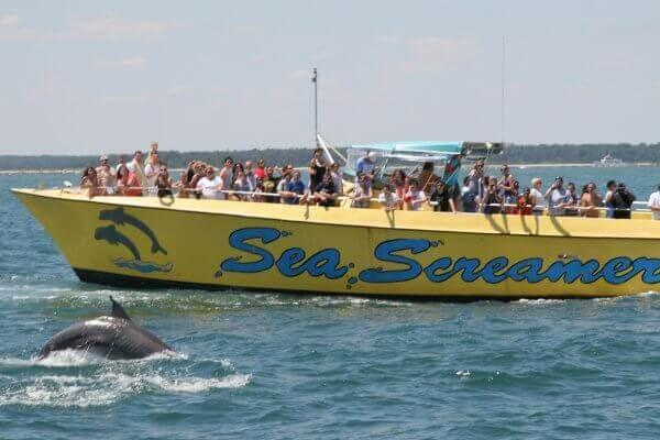 dolphin cruise in Myrtle Beach