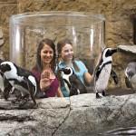 Ripley's Aquarium of the Smokies Penguin Periscope
