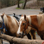 Smoky Mountain Riding Stables Three Horses