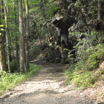 Smoky Mountain Riding Stables Forest Trail