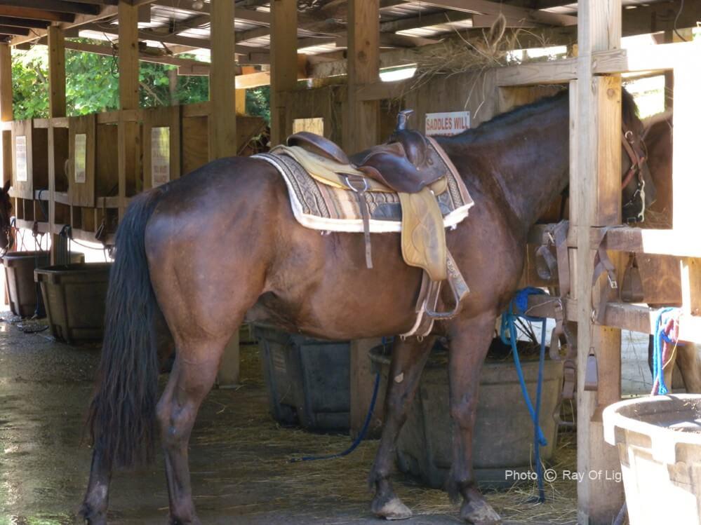 Big Rock Dude Ranch Stabled Horses