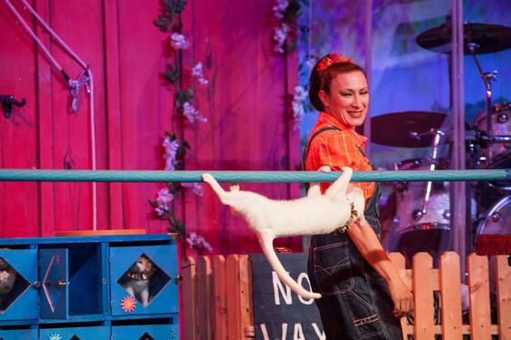 Comedy Barn Cat Acrobatics