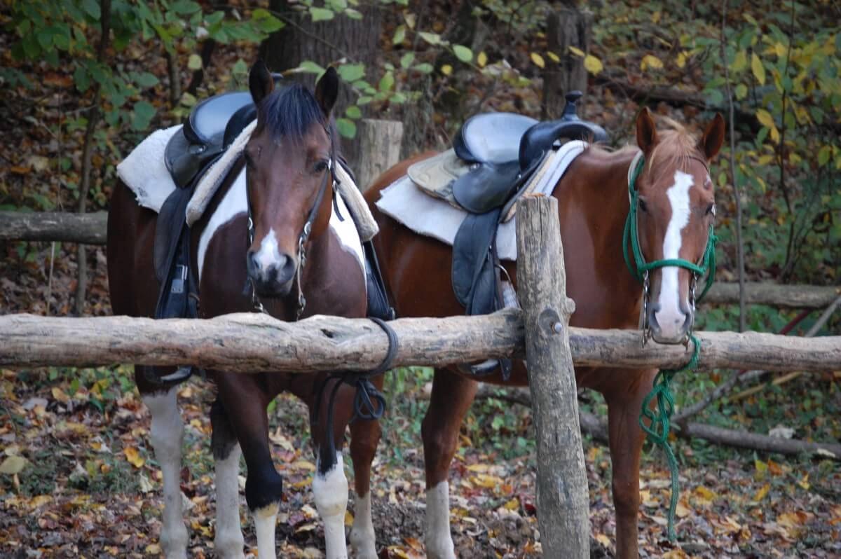Smoky Mountain Riding Stables Tethered Horses