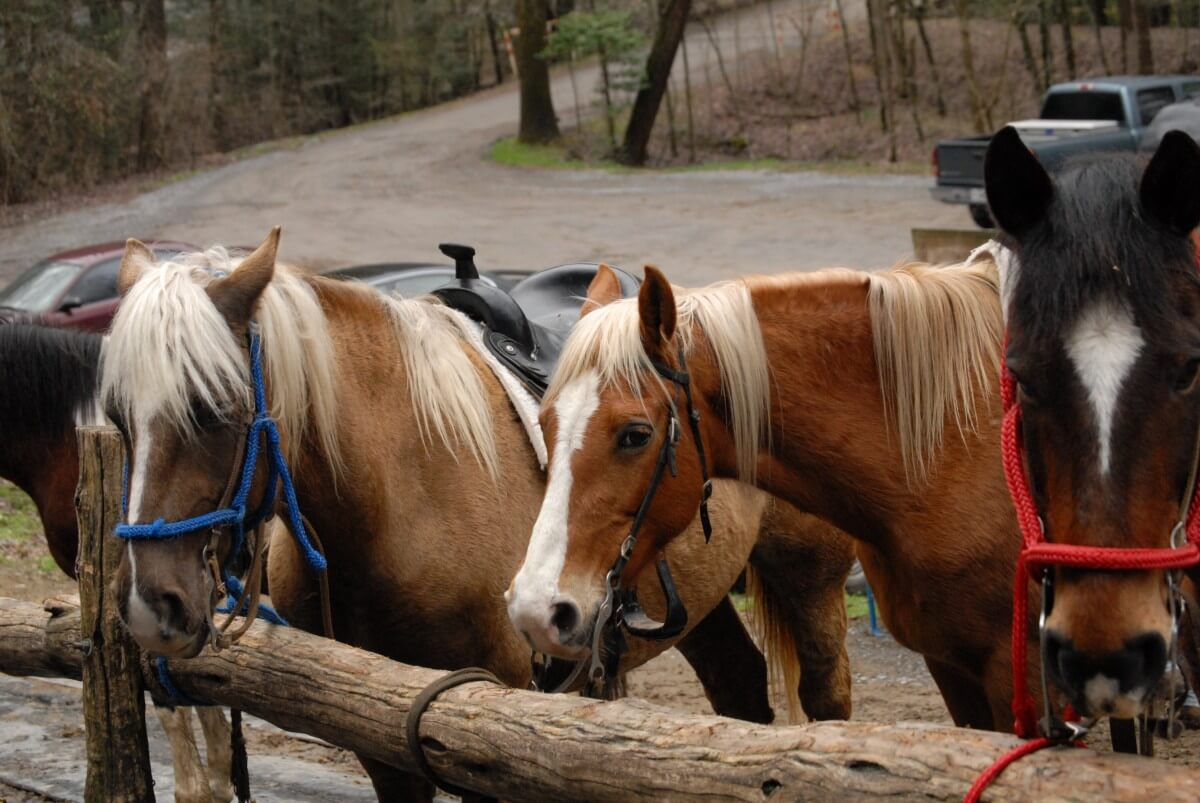 Smoky Mountain Riding Stables Three Horses