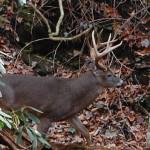 Smoky Mountain Riding Stables Wildlife Outdoors