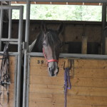 Sugarlands Riding Stables Horse in Stable