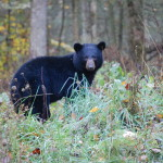 Sugarlands Riding Stables Black Bear