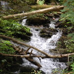 Sugarlands Riding Stables Stream