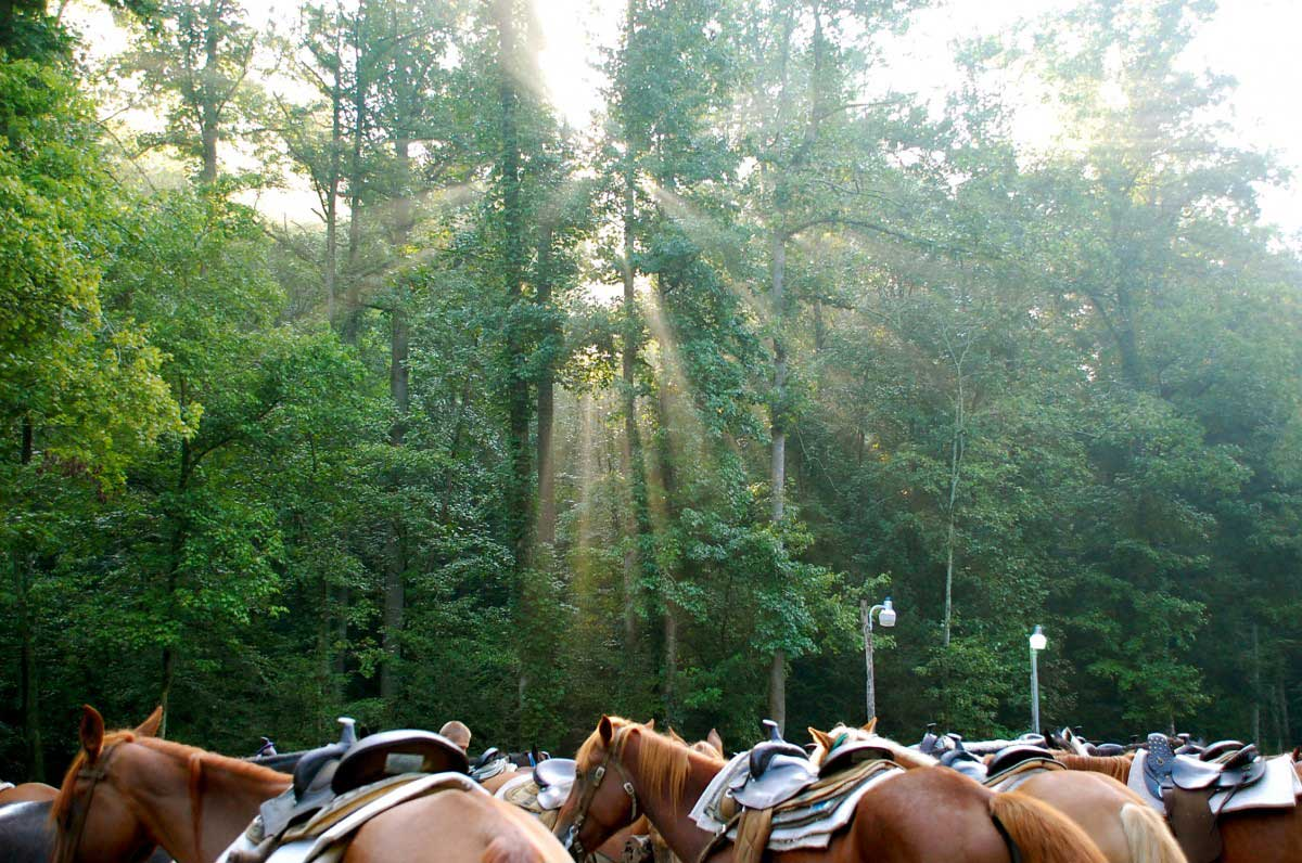 Sugarlands Riding Stables Horses Waiting
