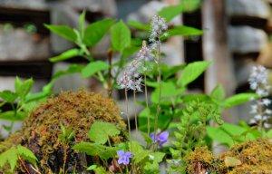 Spring Wildflower Pilgrimage in Great Smoky Mountains