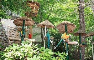 Parrot Mountain Birds