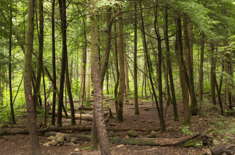Smoky Mountain Forests