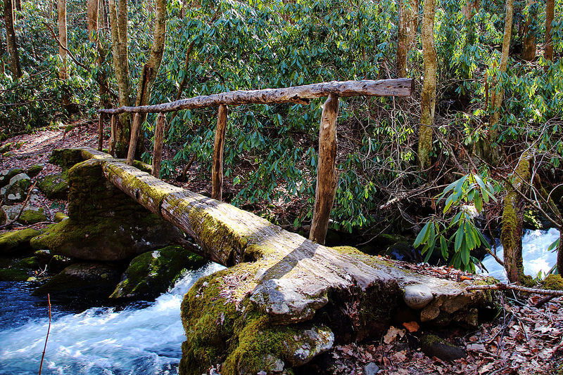 Foot Log at Kephart Prong trail (Great Smoky Mountains National Park)