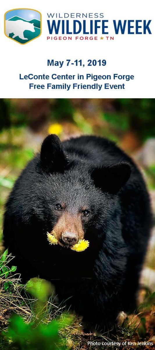 Wilderness Wildlife Week Brochure Image