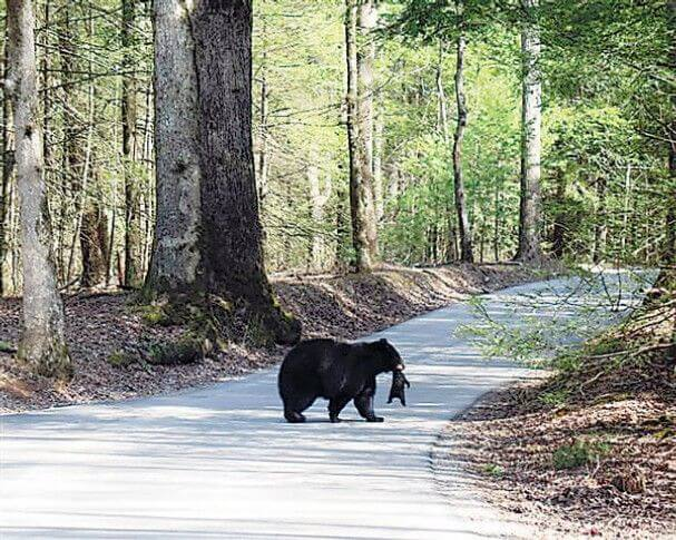 Cades Cove Campground - Great Smoky Mountains National Park