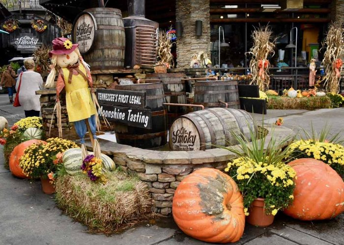 2019 Top 8 Fall Activities in the Smoky Mountains