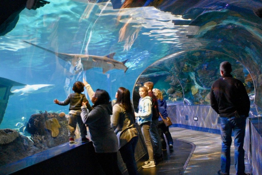 ripley's aquarium of the smokies in gatlinburg