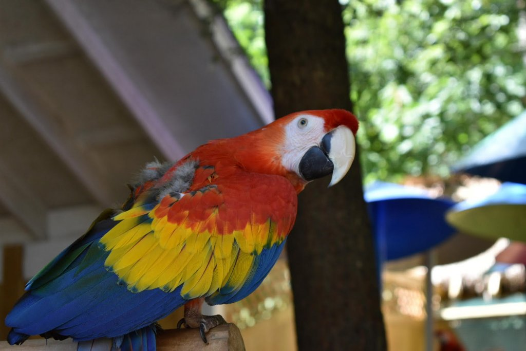 parrot at parrot mountain in sevierville