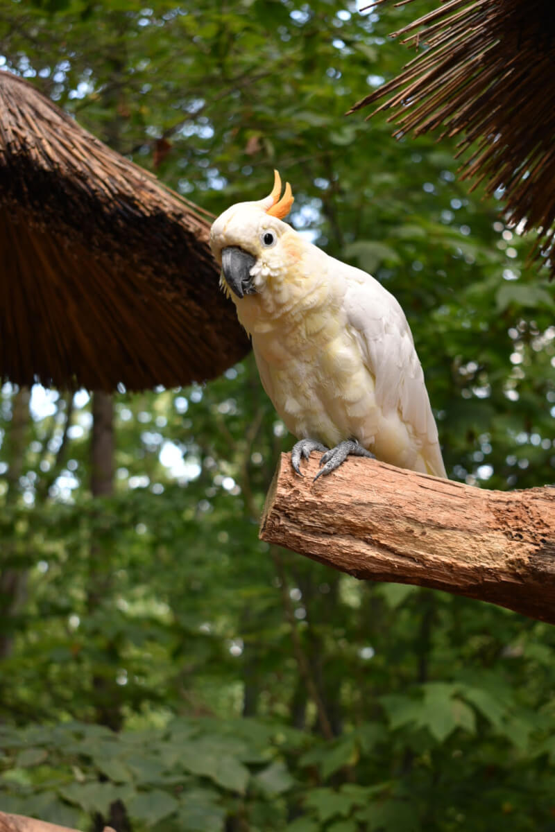 One of many birds at Parrot Mountain, Sevierville, TN