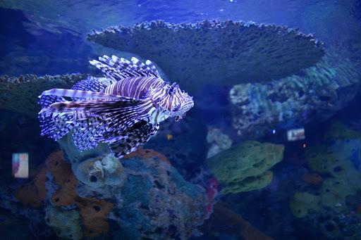 Fish at Ripley's Aquarium of the Smokiesgf