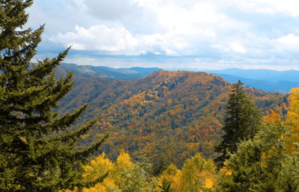 Autumn leaves in the Smoky Mountains