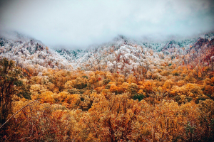 snowy trees in the Smoky Mountains