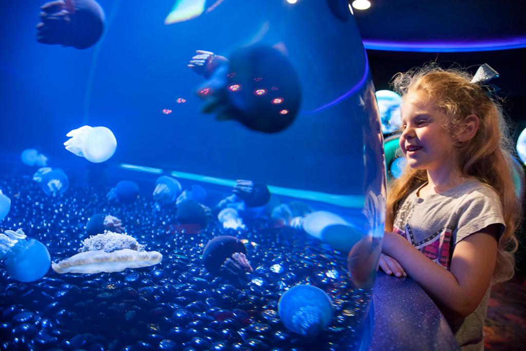 indoor activities at the aquarium