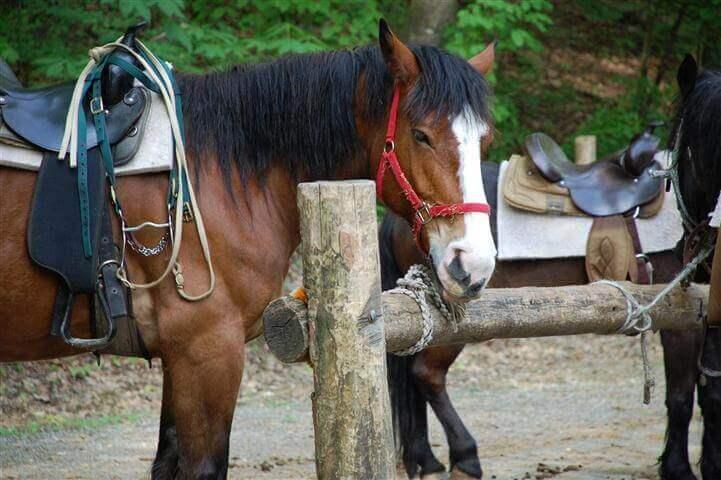 horse at Sugarlands Riding Stables - Gatlinburg
