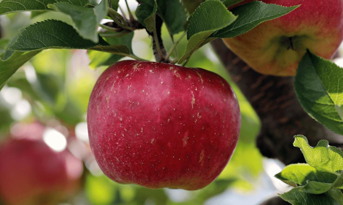 the Apple Barn of Sevierville, TN