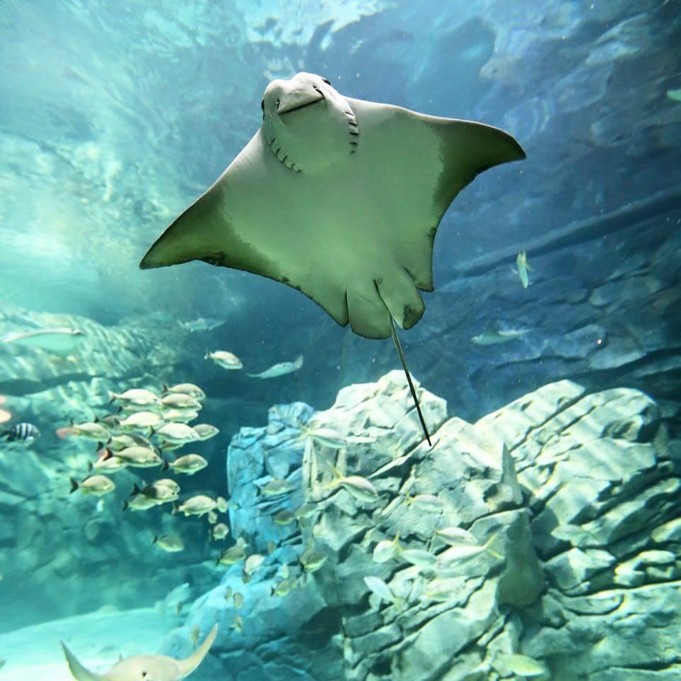 Ripleys aquarium of Gatlinburg