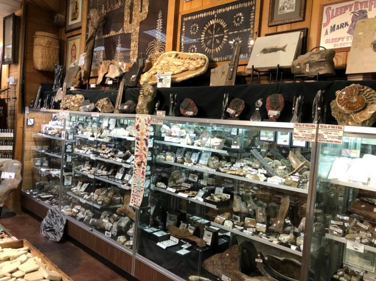 Dinosaur bone at Smoky Mountain Relic Room - Sevierville, TN